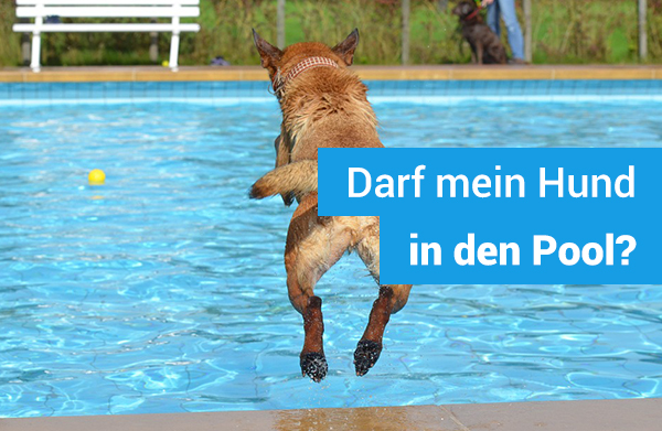 darf-hund-in-swimming-pool